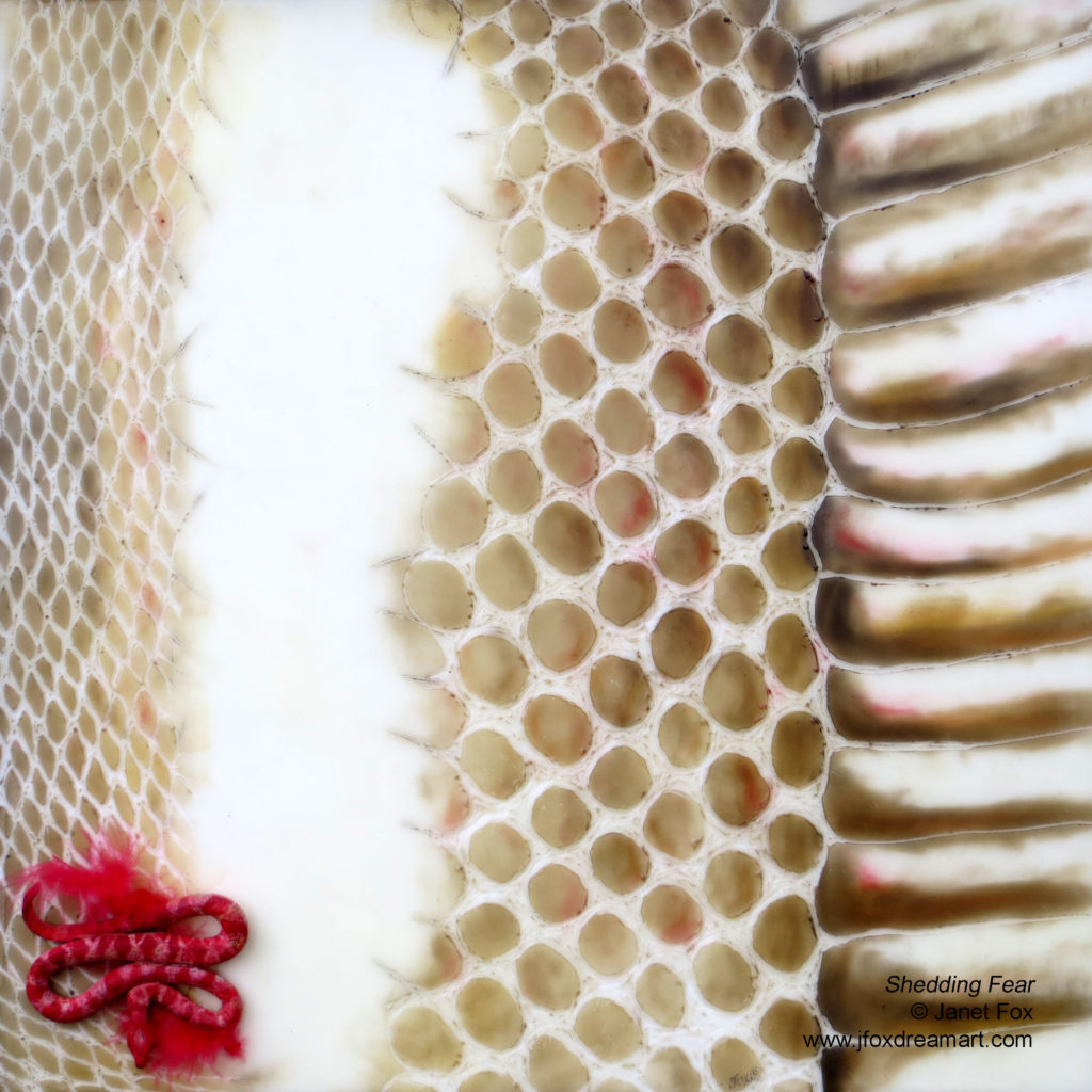 Image of an encaustic painting by Janet Fox of shedded snake skin with a miniature paper clay snake replica on a red feather.